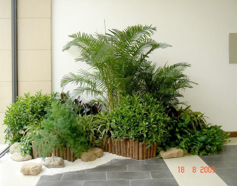 组合植物8.jpg