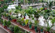 绿植植物租赁价目表
