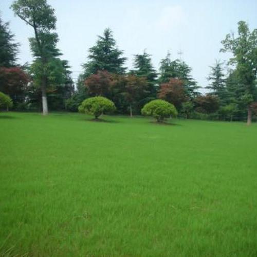 上海正翔绿化养护方案
