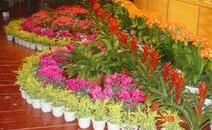 正翔园艺植物租赁的详细流程