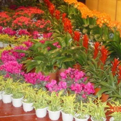 植物租赁服务流程