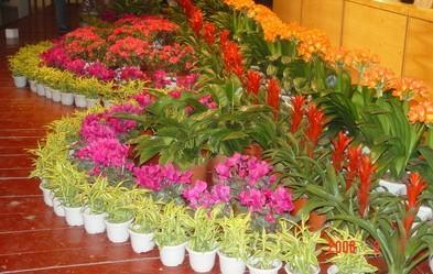 组合植物11.jpg