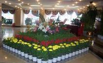 【植物租摆】在什么情况下选择租赁植物更划算?