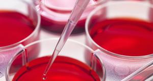 原代细胞培养