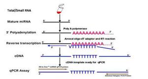 RT-PCR实验