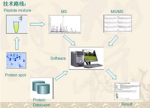 质谱分析.png