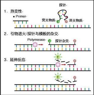 Realtime PCR 订单.doc