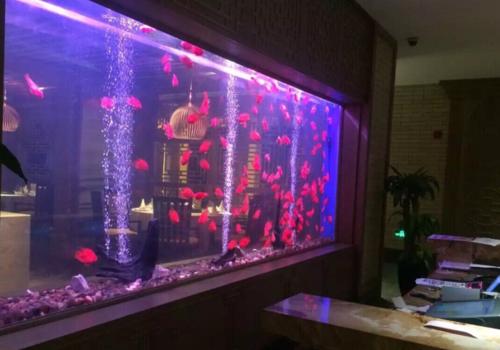 观赏鱼缸定制