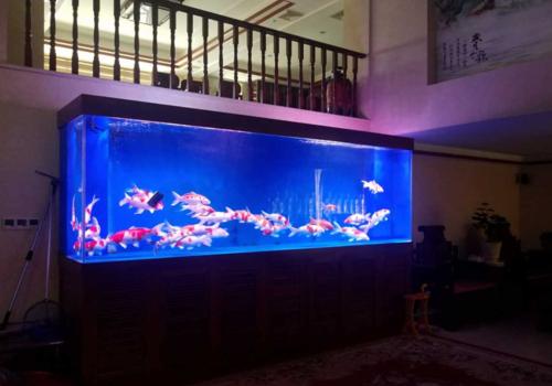 大型观赏鱼缸定制