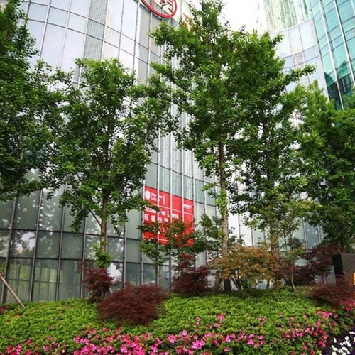 未来资产大厦绿地养护工程