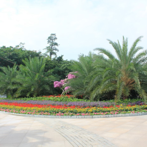 大沙河公园