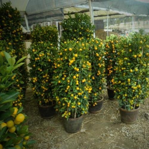 室内植物绿化养护