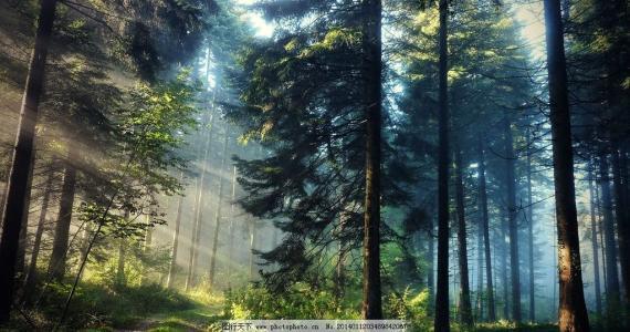 森林图片.jpg