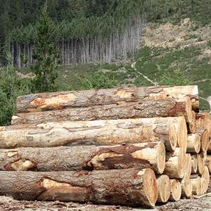 七月实施的木业相关环保新规与行动