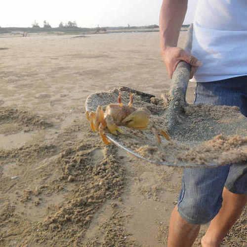 【体验】东楮岛海边游玩特色项目——挖沙蟹(免费)