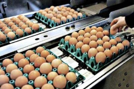 """香港检出欧洲""""毒鸡蛋"""" 官方停售下架!事件蔓延,氟虫腈该如何检测?"""