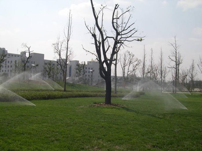 桐泾公园.jpg