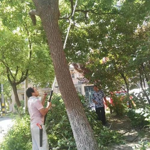 七宝镇静安新城一区绿化修剪工程