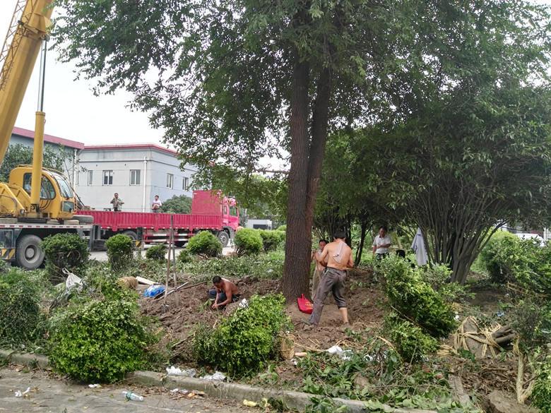 上海正翔绿化工程有限公司