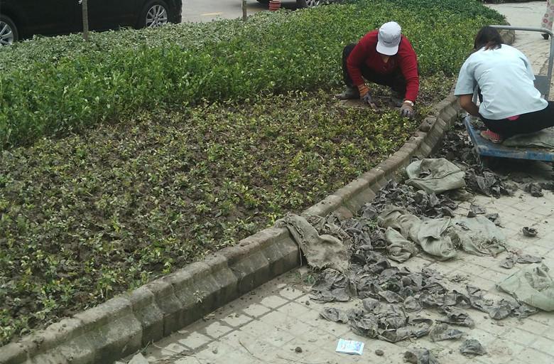 上海绿化施工队