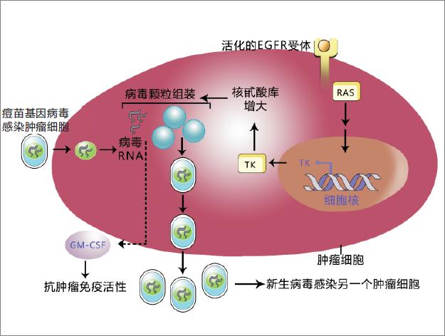 溶瘤病毒.png
