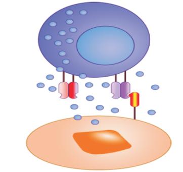 NK细胞技术平台