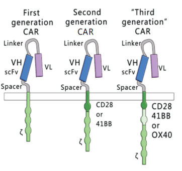 CAR-T细胞治疗技术平台