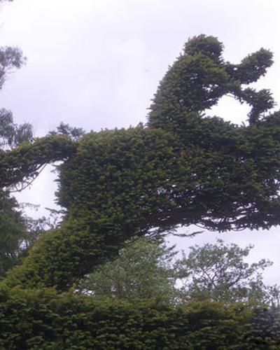 【園藝養植】奇特的園林植物造型