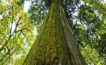为什么美桑家用汗蒸房都用加拿大铁杉和红雪松?