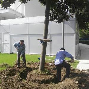 張江牛頓路廠區綠化移植