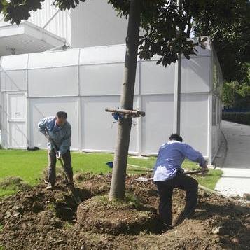 张江牛顿路厂区绿化移植