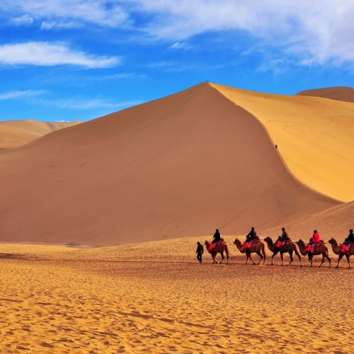 沙漠之金王