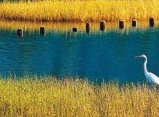 湿地乱舞,情何以堪