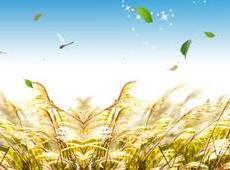 """""""一粒米""""撬动乡村旅游发展——乡村旅游的特色众筹之路"""