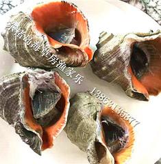 【渔食】东楮岛渔家宴:海鲜大锅蒸,好吃又过瘾