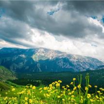 新疆昭苏 | 草原遍地野花开