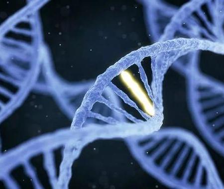 """如何强化人体自身免疫力?只需打开 DNA""""开关"""""""
