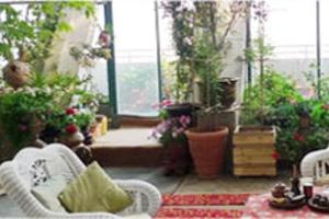 室内摆放植物盆栽