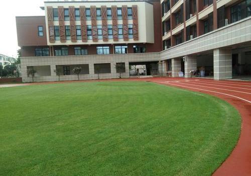 足球草-混合草