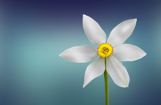 White and Yellow Flower