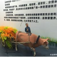 农业耕种场景西甲万博app
