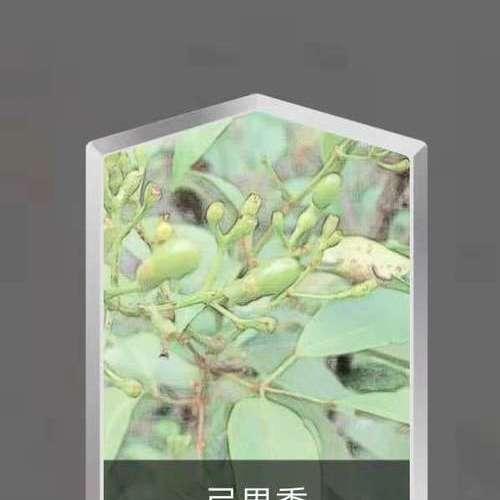 弓果黍.jpg