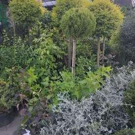 室外绿植造景