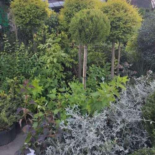 室外绿植集体照.jpg