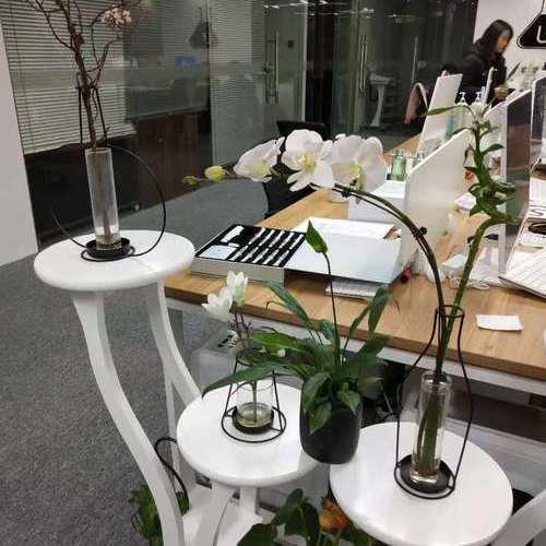 蝴蝶兰办公室设计.jpg