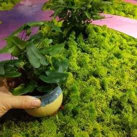室内小花园绿化