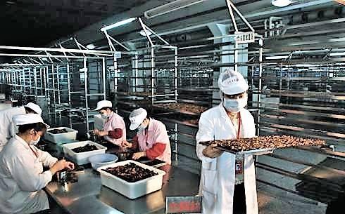 槟榔厂工作中照片