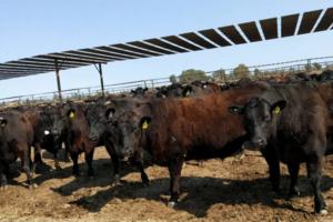肉品寻源,战略联盟——九田家澳洲行