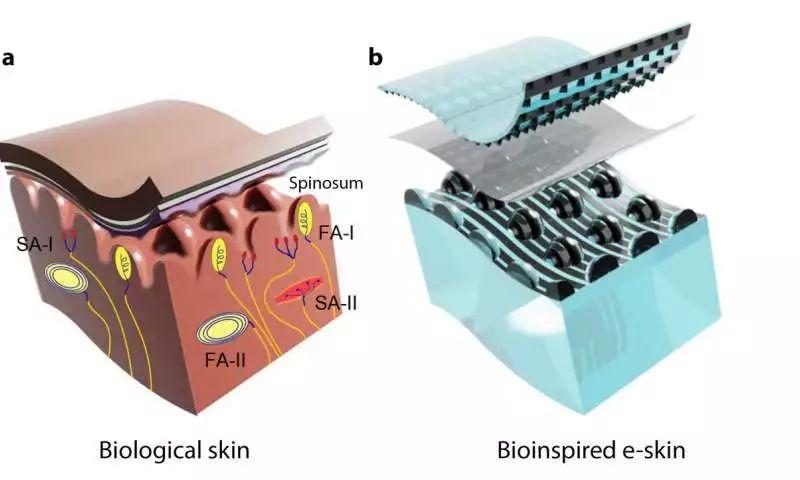 斯坦福大学电子皮肤,希望赐予机器人如人类般敏感而优质的触觉|Science Robotics发布