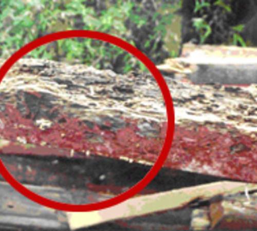 遇到烦人的白蚁怎么办,白蚁防治方法给大家介绍一下。